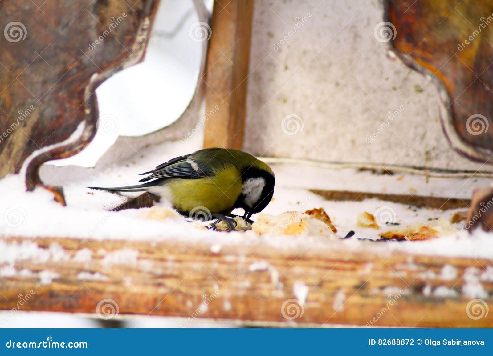 L uccello sull alimentatore