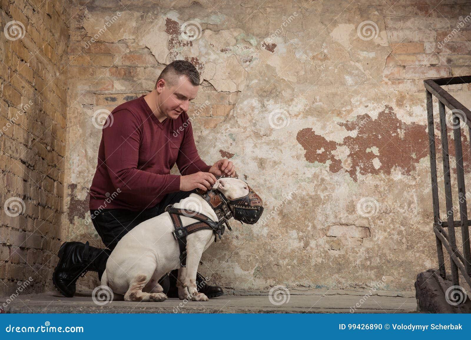 L uomo abbottona un collare di cane contro lo sfondo di una parete della sbucciatura Ritratto dell uomo e del bianco bull terrier