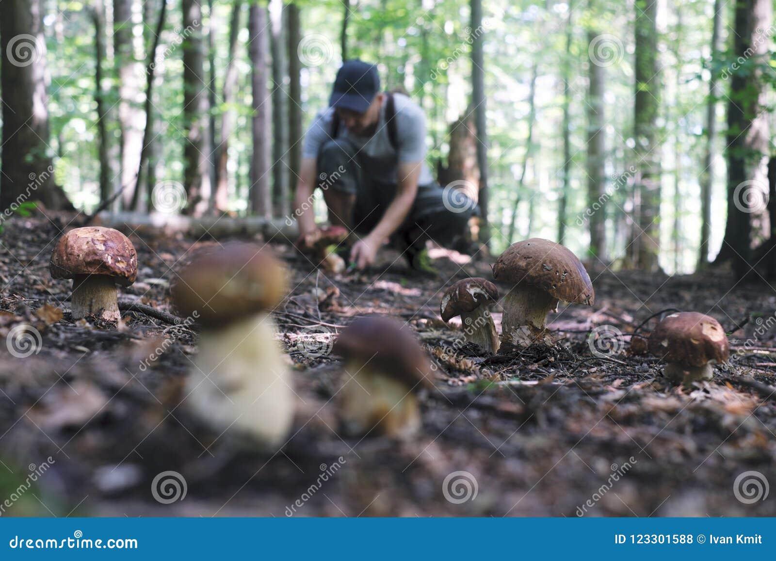 L uomo raccoglie i funghi