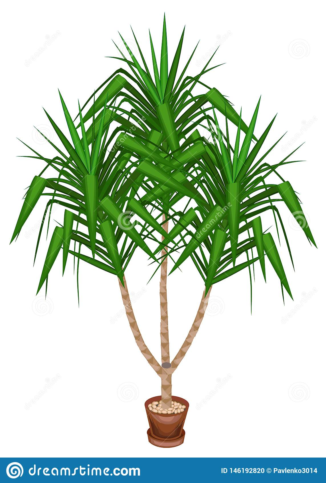 L yucca ? un elefante Una bella pianta sempreverde in un vaso Decorazione dell ufficio e della casa Albero sempreverde Illustrazi