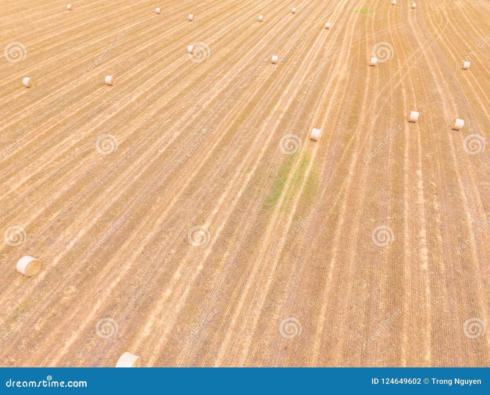 La bala de la visión superior hace heno en granja del maíz después de la cosecha en Austin, Tejas,