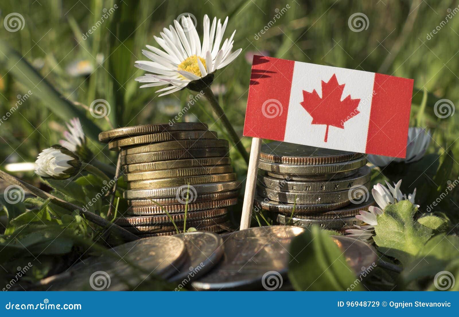 La bandera canadiense con la pila de dinero acuña con la hierba