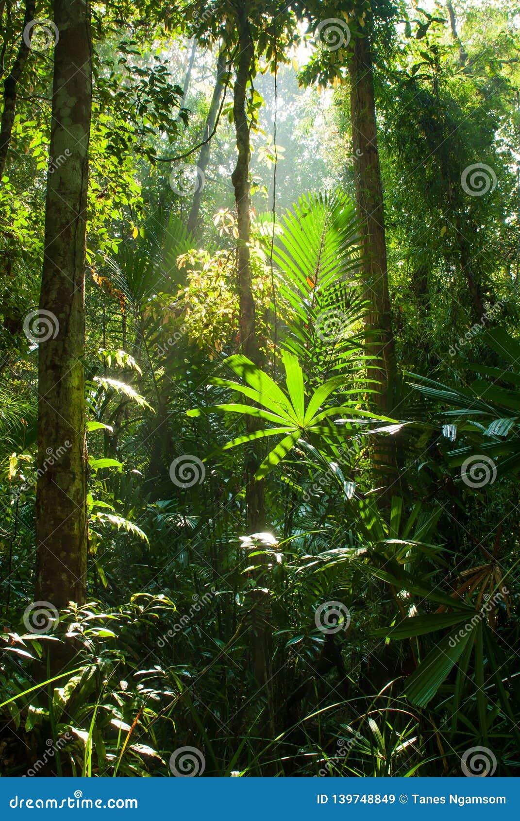 La bella alba splende giù sulla foresta della palude della torba alla palude Forest Nature Research della torba di Sirindhorn ed