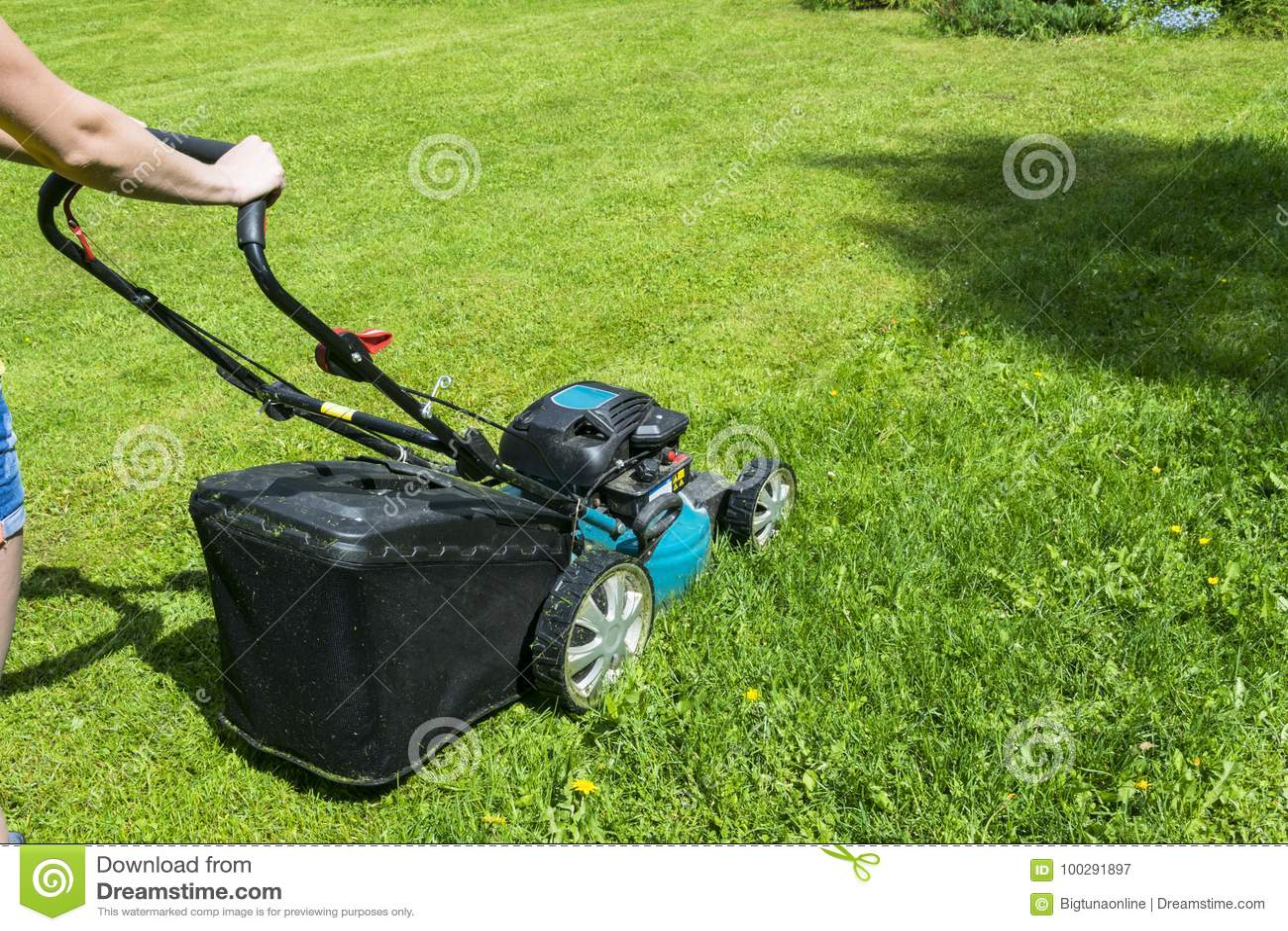 La belle fille coupe la pelouse Pelouses de fauchage Tondeuse à gazon sur l herbe verte Équipement d herbe de faucheuse Outil de