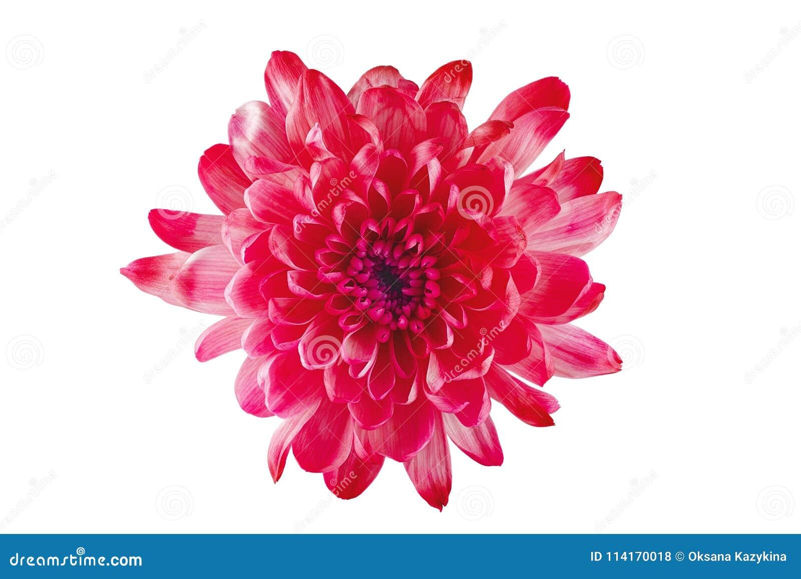La Belle Fleur Rouge Avec Les Petales Jaunes Et Le Coeur Jaune Sur