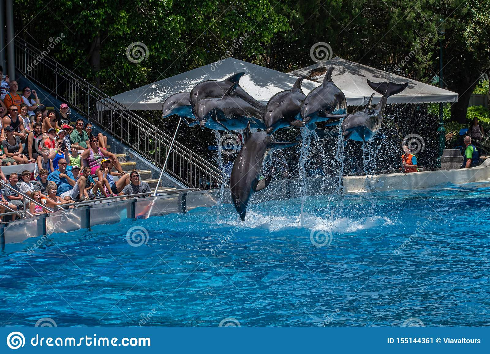 La belle vue des dauphins sautant en quelques jours de dauphin montrent chez Seaworld 2