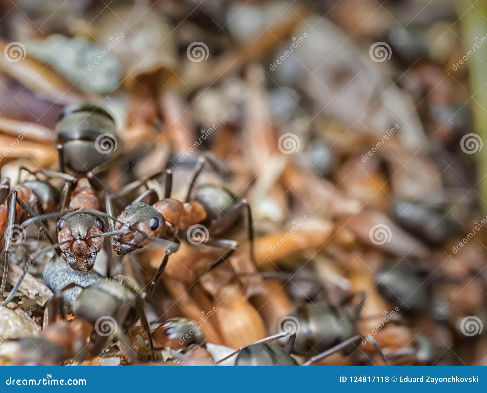 La Belleza De La Naturaleza Hormigas En El Jardín Foto de archivo ...