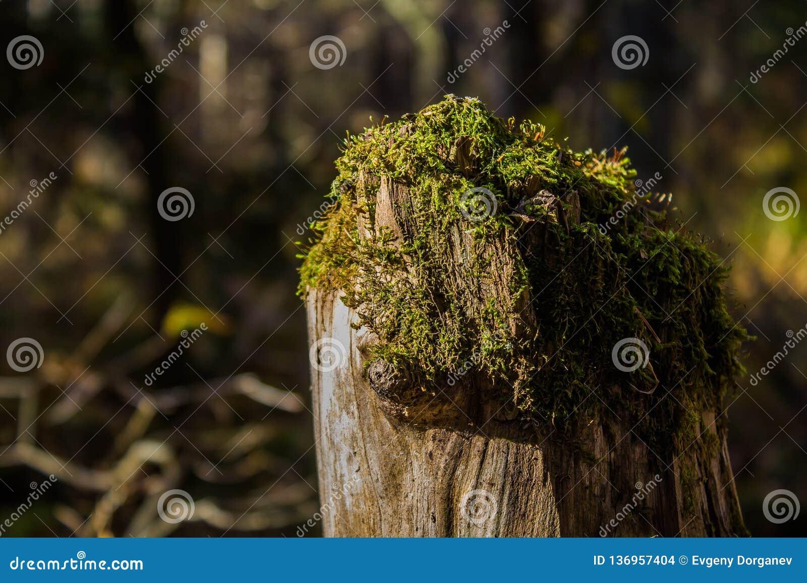 La belleza del bosque tocón