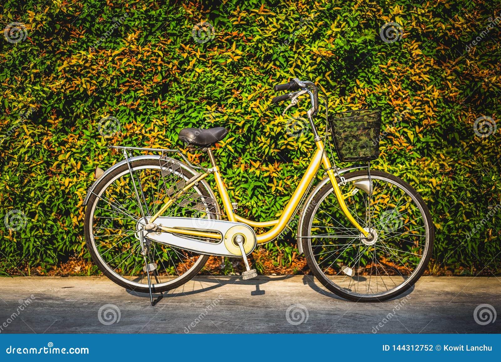 La bicyclette de cru sur le fond coloré de mur de feuilles