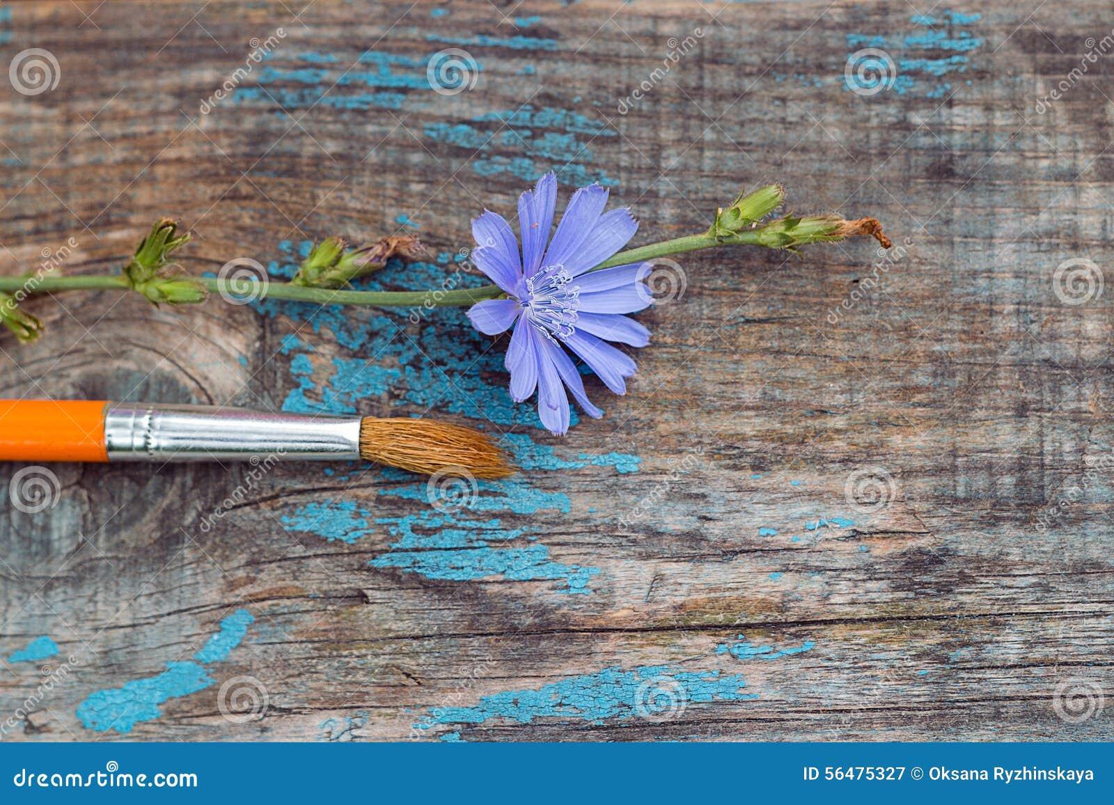 La brosse et la chicorée fleurissent sur le vieux conseil en bois
