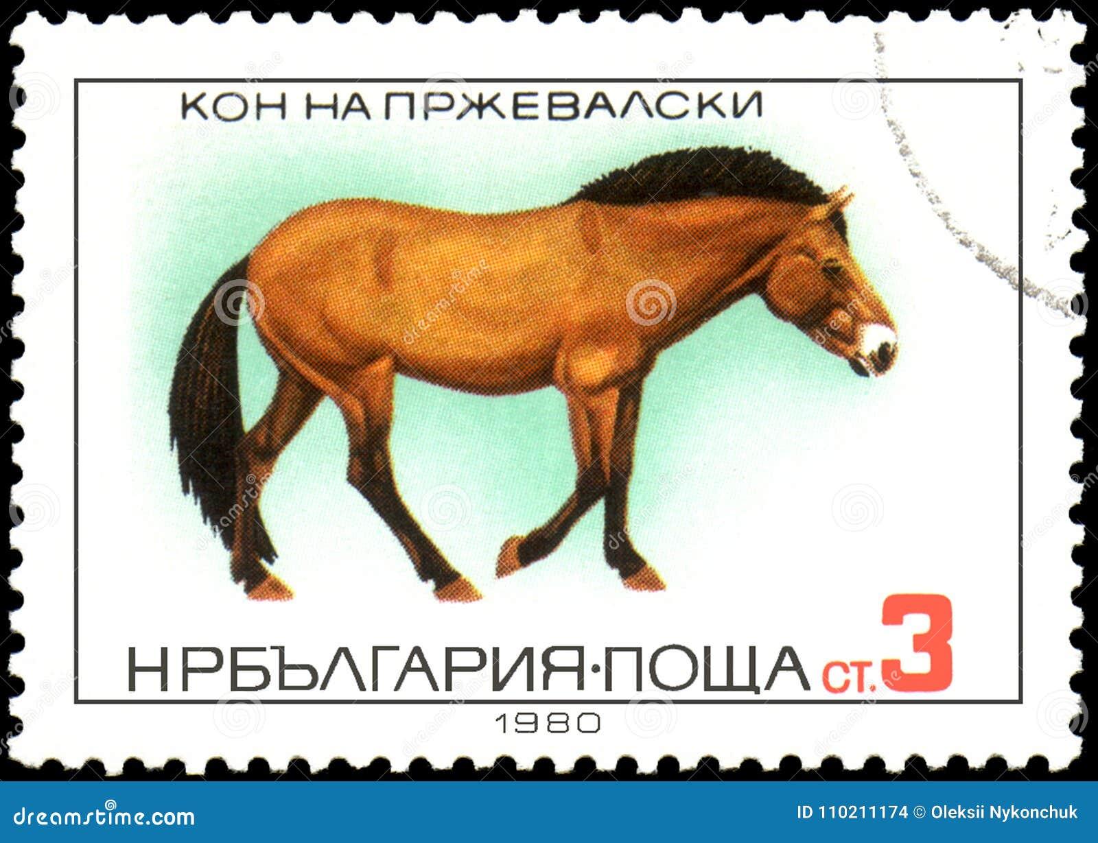 LA BULGARIA - CIRCA 1980: un bollo, stampato in Bulgaria, mostra un cavallo del ` s di Przewalski