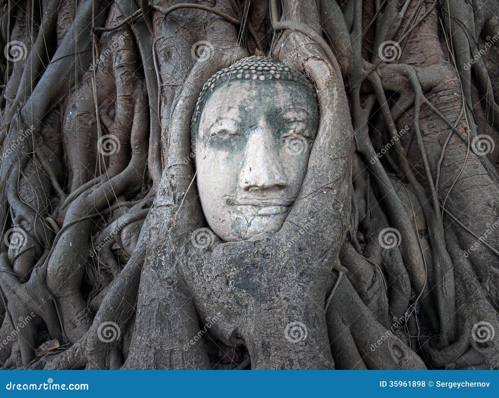 La cabeza de Buda en árbol arraiga en Wat Mahathat, Ayutthaya, Tailandia