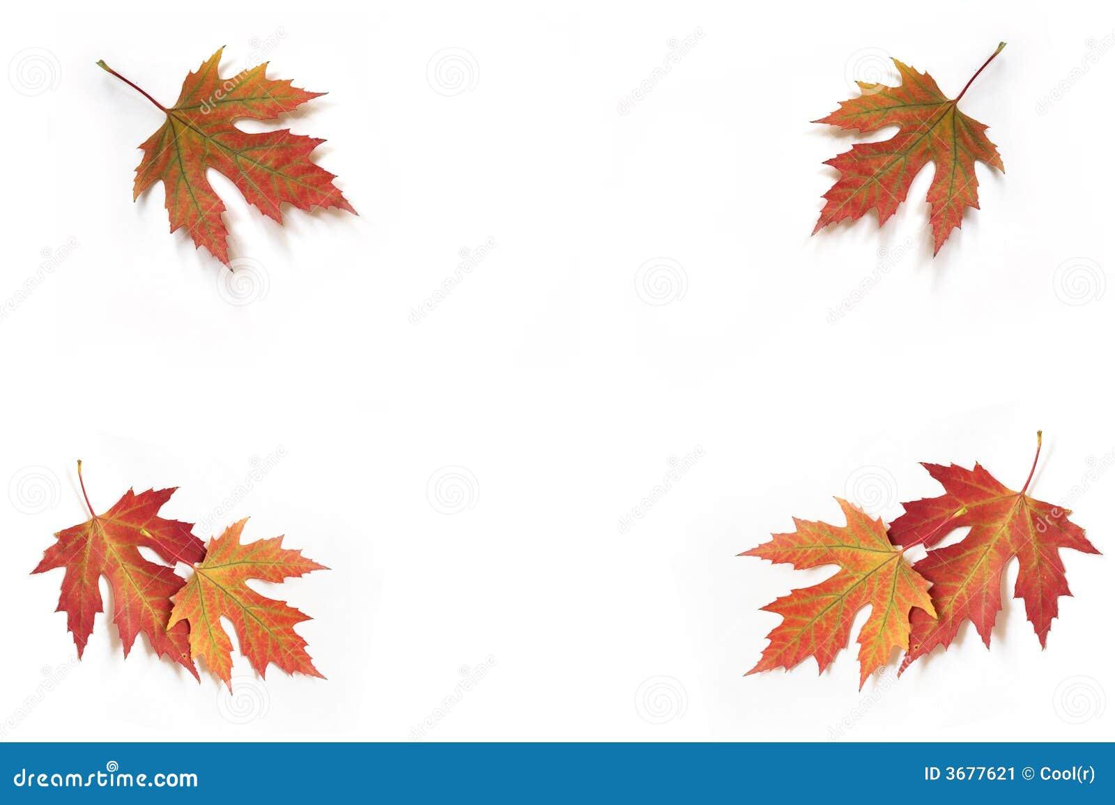 Download La Caduta Di Autunno Lascia 5. Immagine Stock - Immagine di arancione, fogli: 3677621