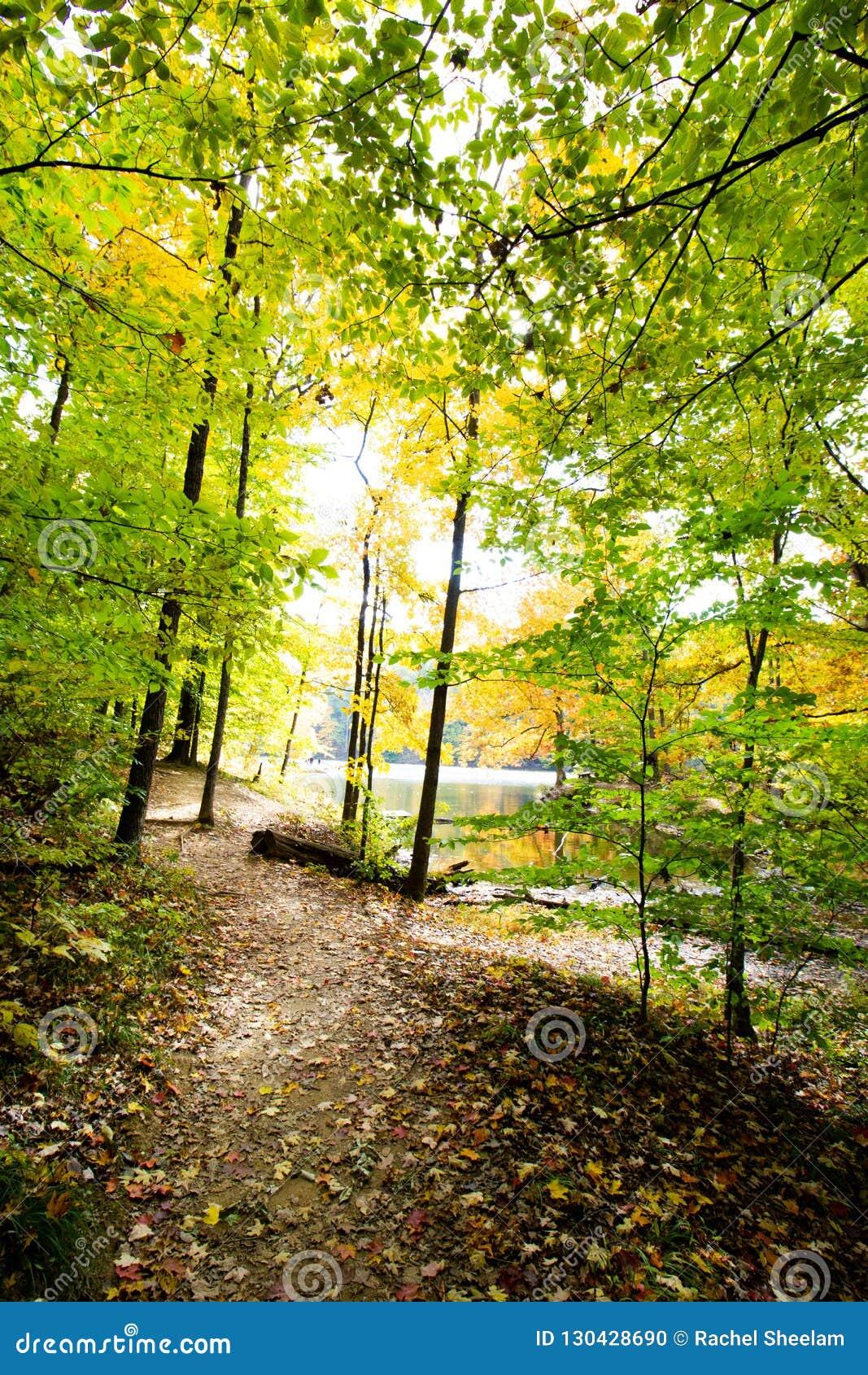 La caduta sopra occhieggia parco di stato del lago, la contea di Brown, Indiana