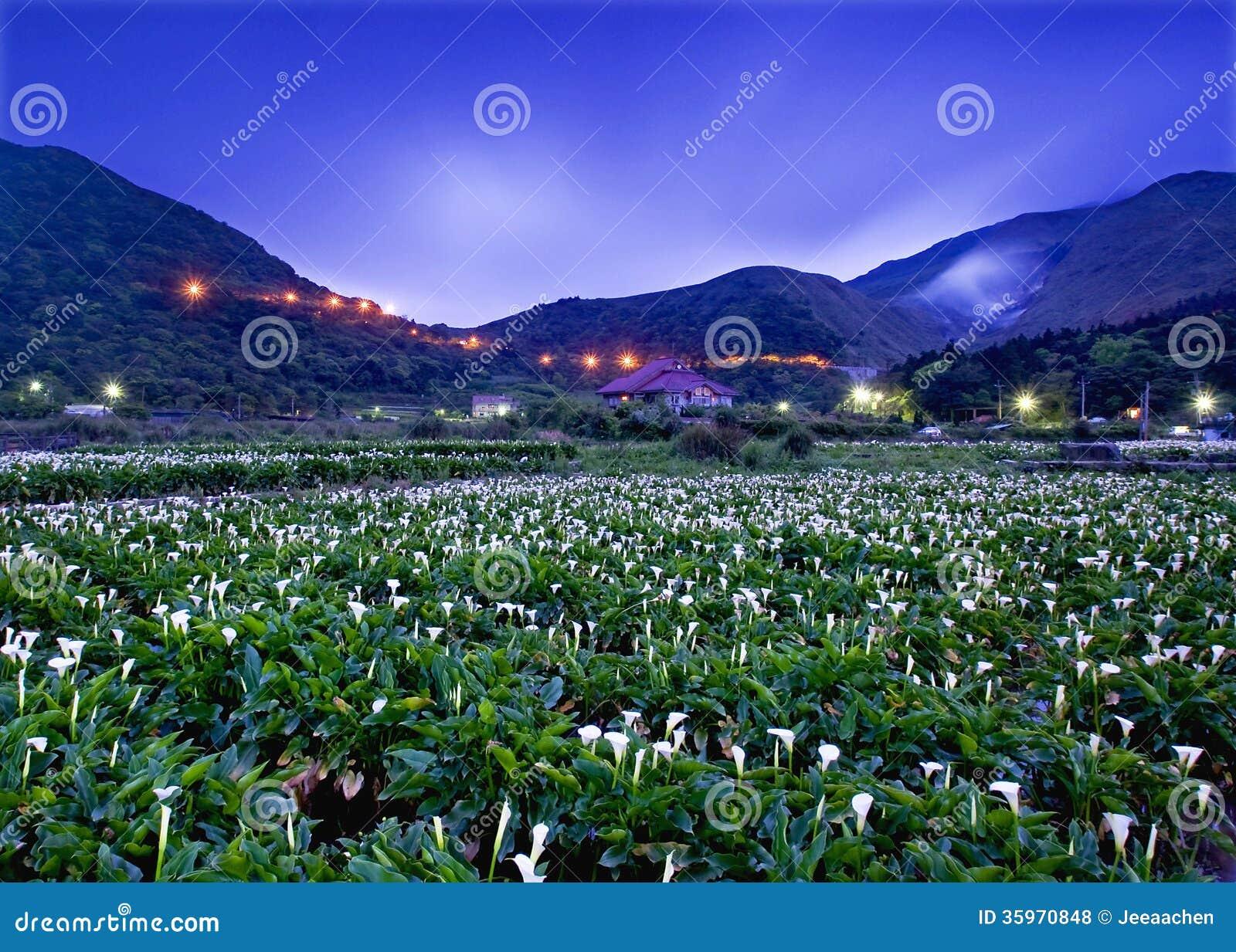 La cala cultiva la visión en Taiwán Taipei
