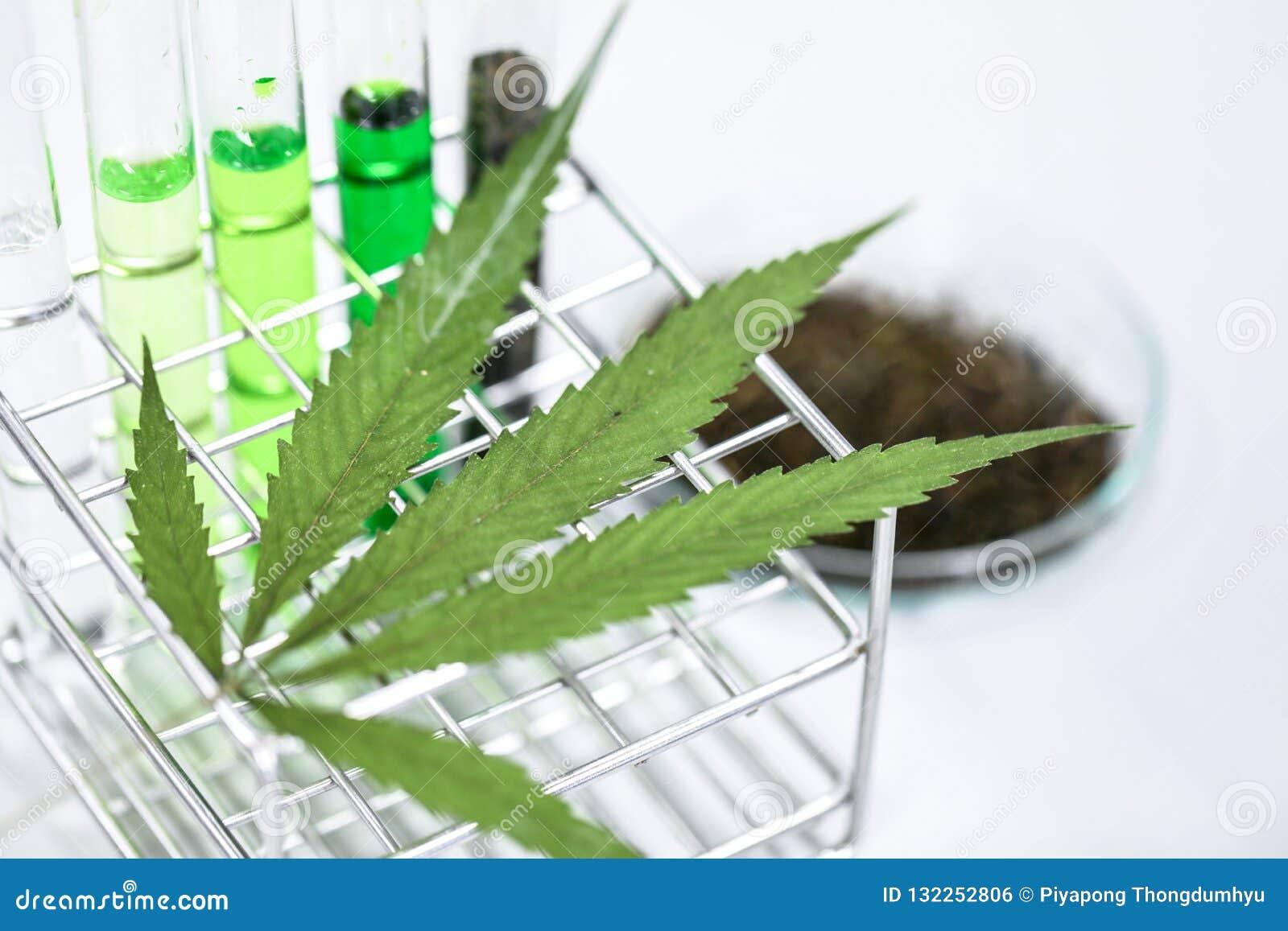 La cannabis droga, l analisi della cannabis in laboratorio