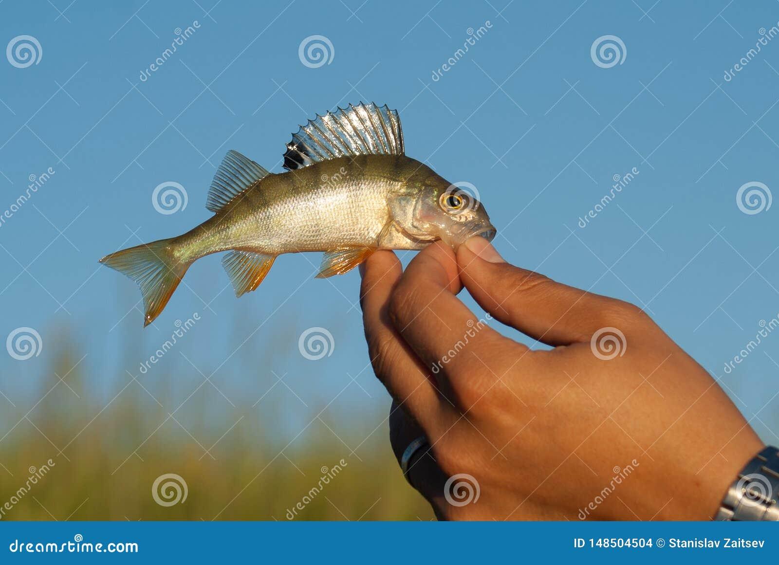 La captura del hombre un pequeño pescado