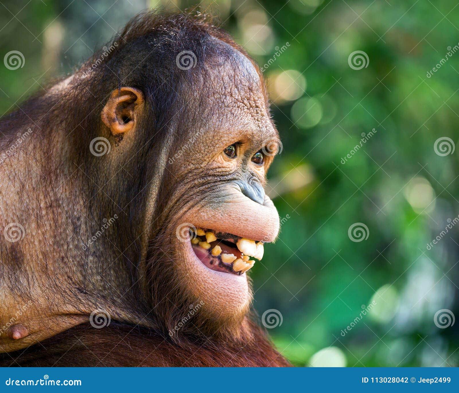La cara del orangután