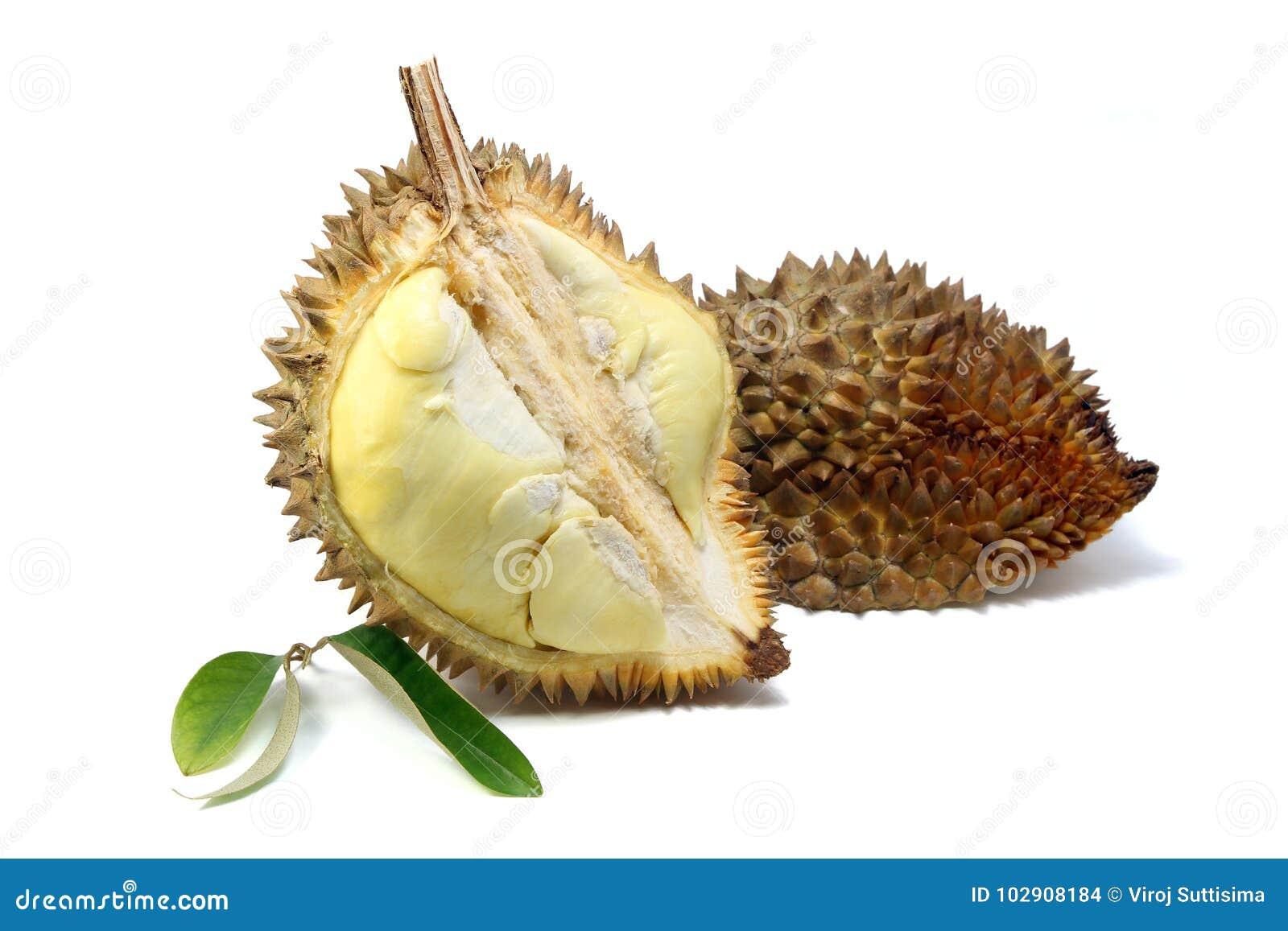 La carne gialla del Durian ed il Durian coprono di foglie su fondo bianco