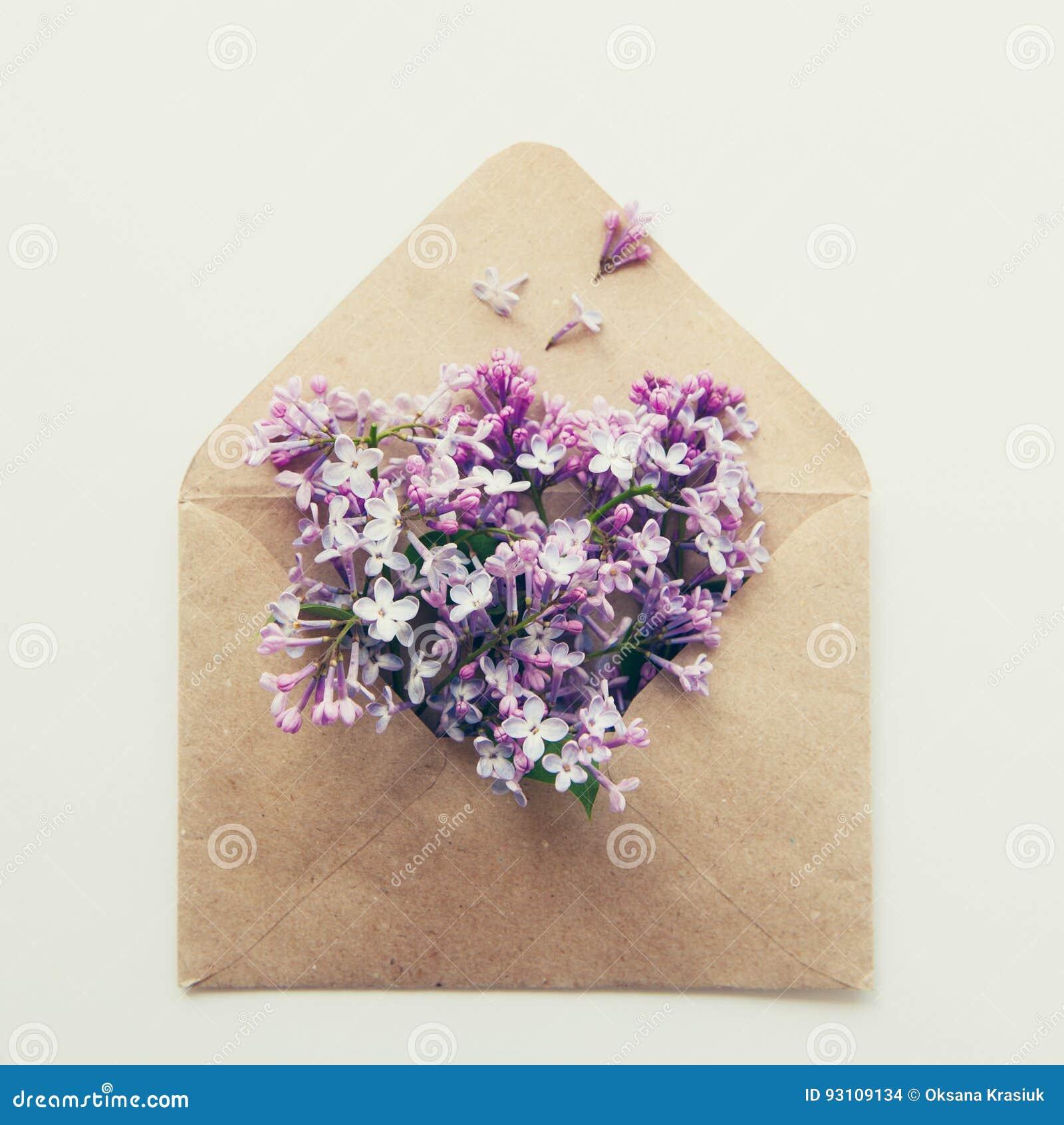 La carte carrée de vintage avec la fin a ouvert l enveloppe de papier de métier remplie de fleurs lilas pourpres de fleur de ress