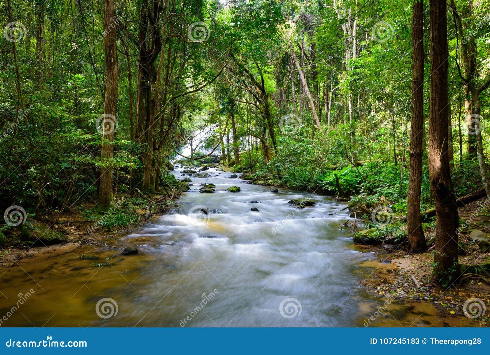 La Cascada Cae Sobre Tronco Cubierto De Musgo En Selva Tropical Con ...