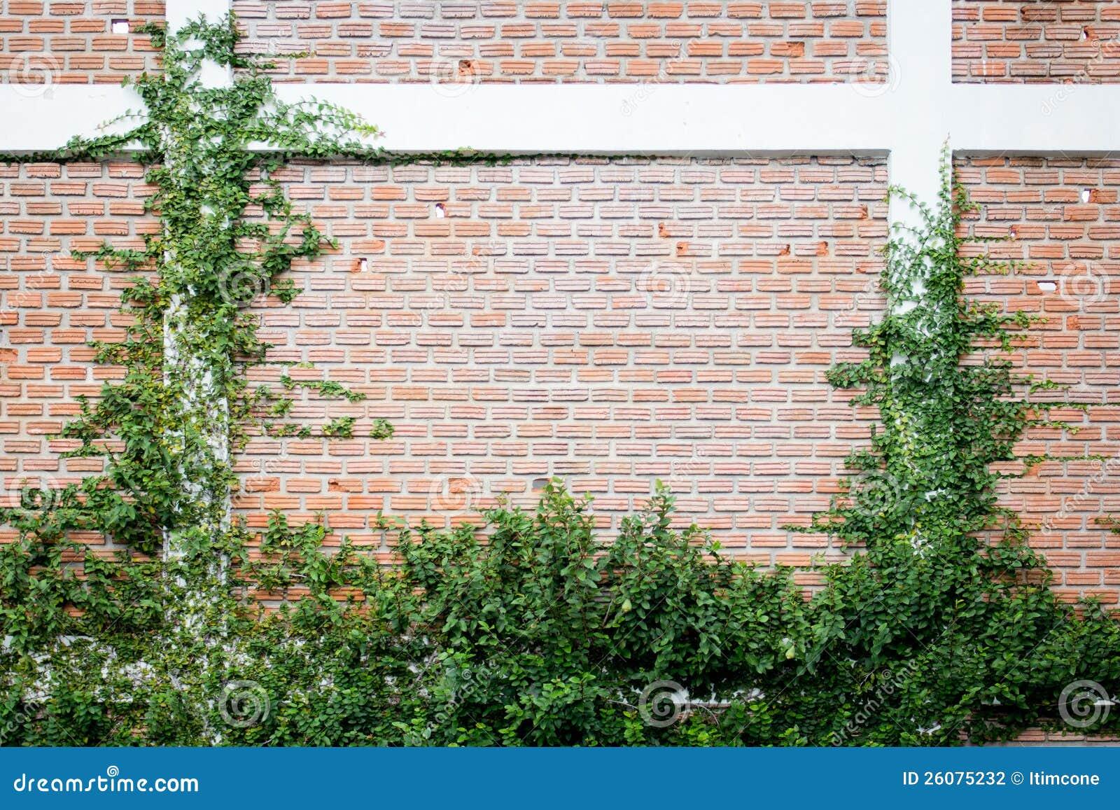 la centrale verte de plante grimpante sur un mur de briques photographie stock image 26075232. Black Bedroom Furniture Sets. Home Design Ideas