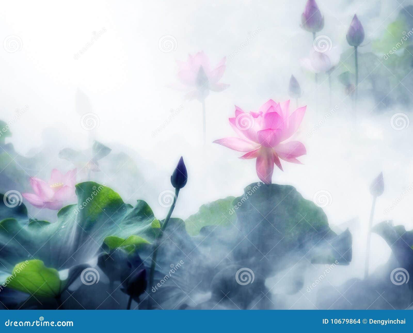 La charca de loto brumosa de la mañana