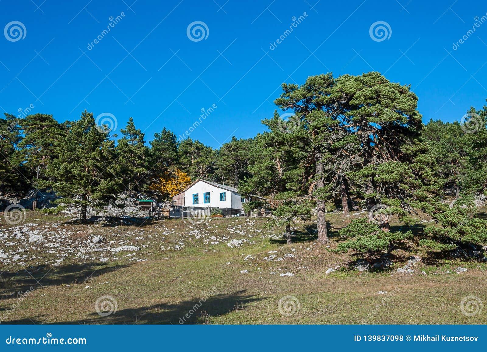 La choza del silvicultor entre árboles del siglo contra el cielo azul