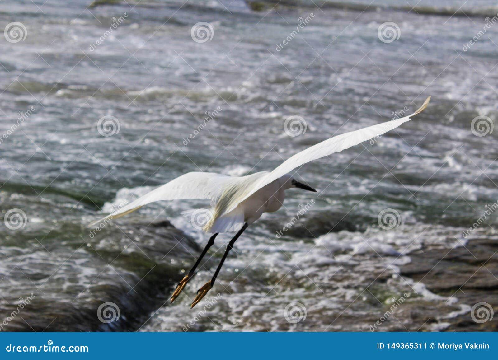 La cicogna bianca ? alla spiaggia