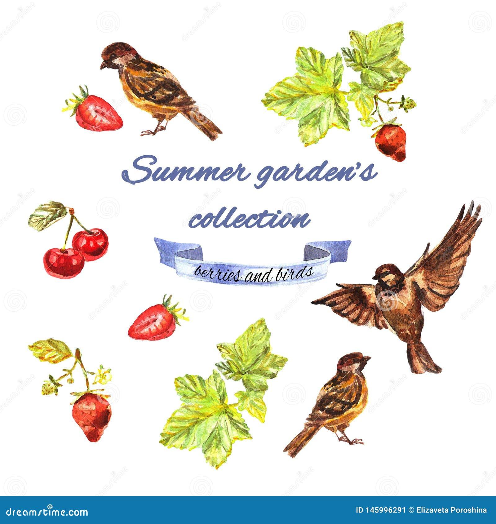 La collection du jardin d été avec la groseille, moineaux, fraises, cerises