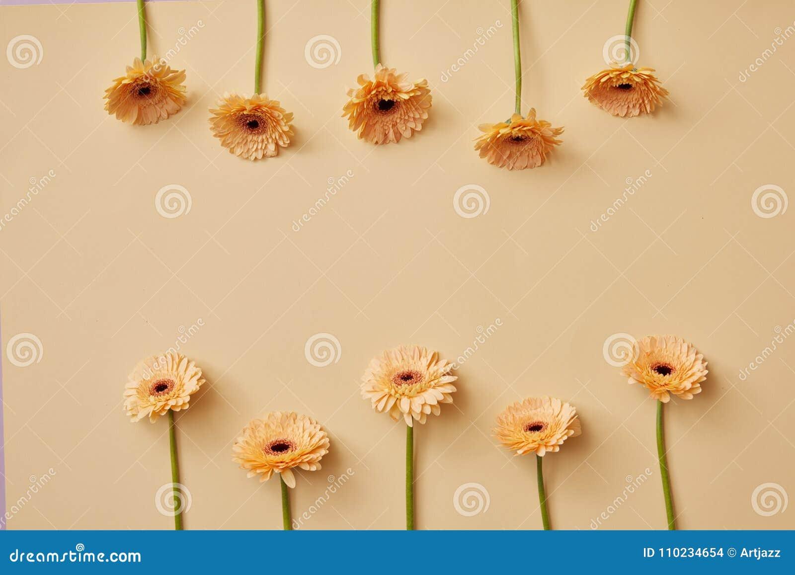 La composición creativa del beige florece los gerberas para el ` s del día o de la madre del ` s de la tarjeta del día de San Val