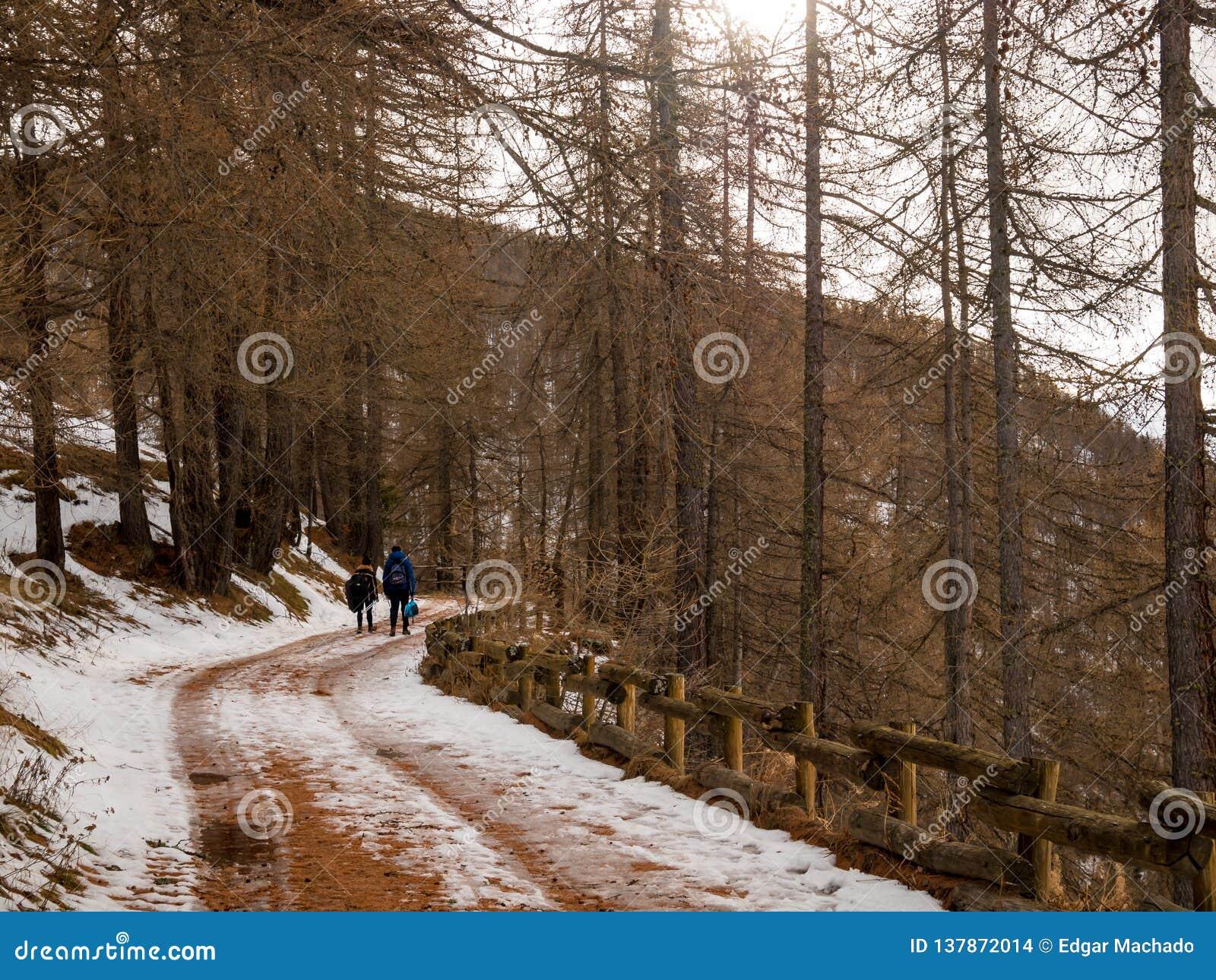 La coppia cammina attraverso la foresta in neve