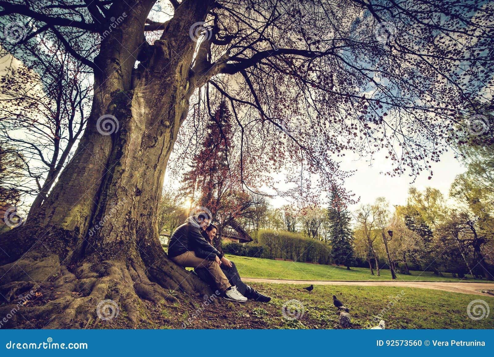 La coppia si siede sotto l albero sul tramonto