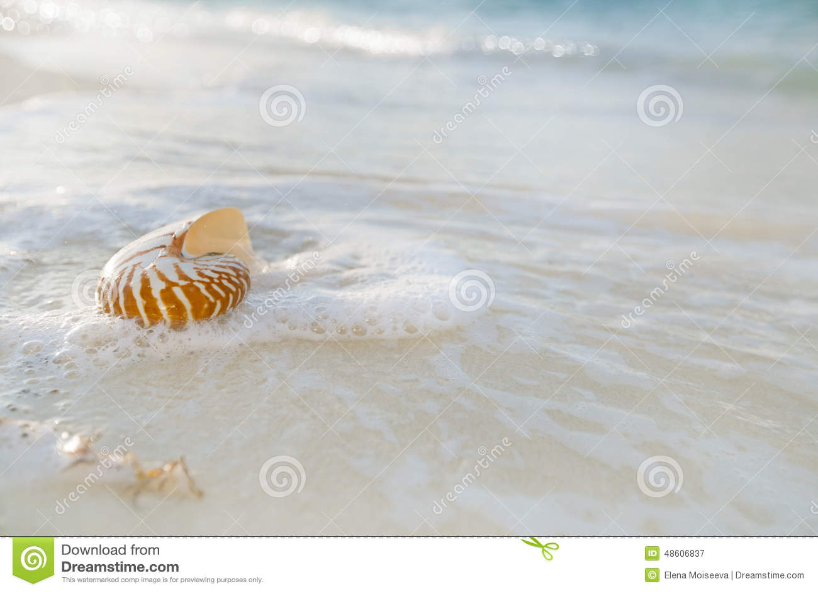 La coquille de Nautilus sur le sable blanc de plage s est précipitée par des vagues de mer
