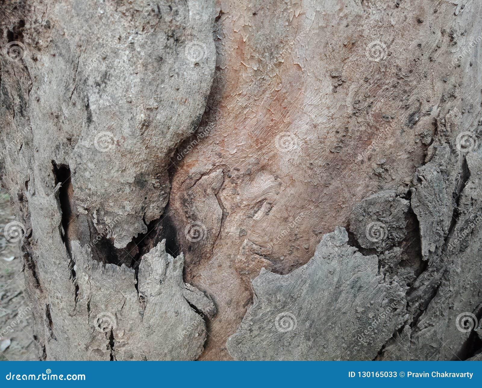 La corteccia di albero ha strutturato il fondo, carta da parati del paesaggio della natura