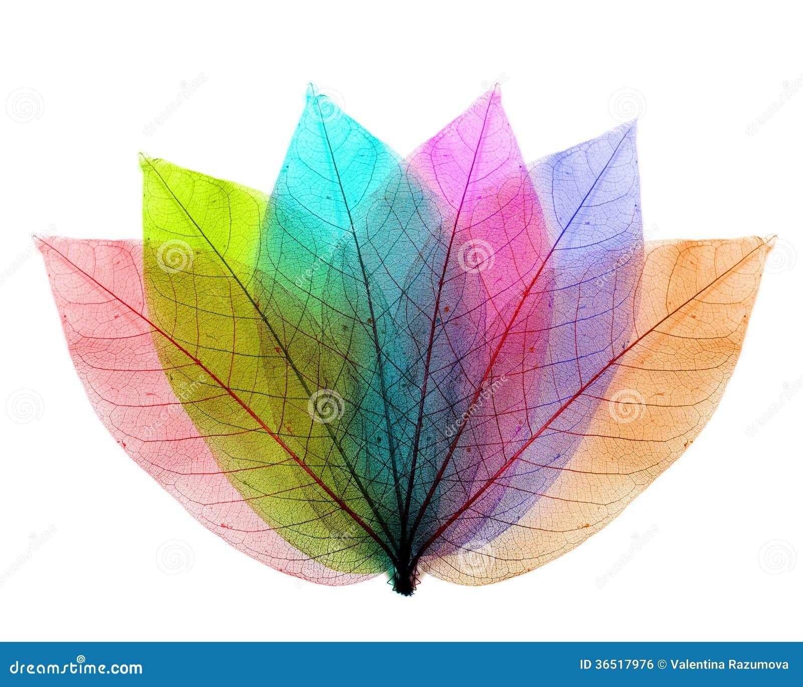 La couleur laisse la forme abstraite