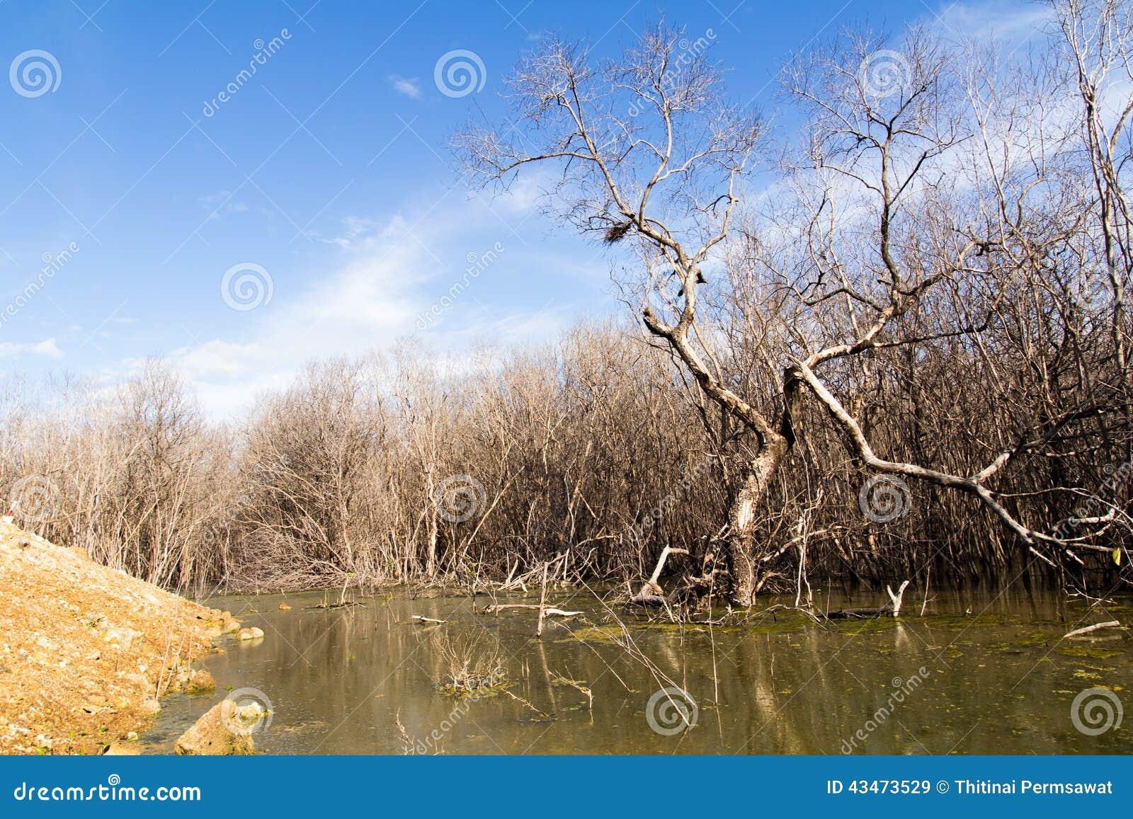 La dégradation de forêt de palétuvier