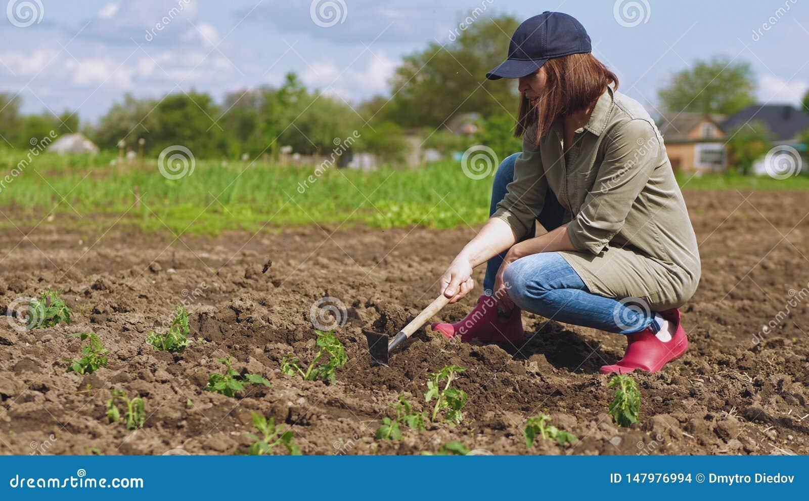 La donna allenta il suolo prima della piantatura delle piantine