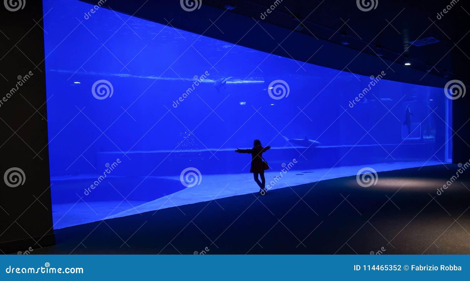 La donna da solo ammira un grande acquario