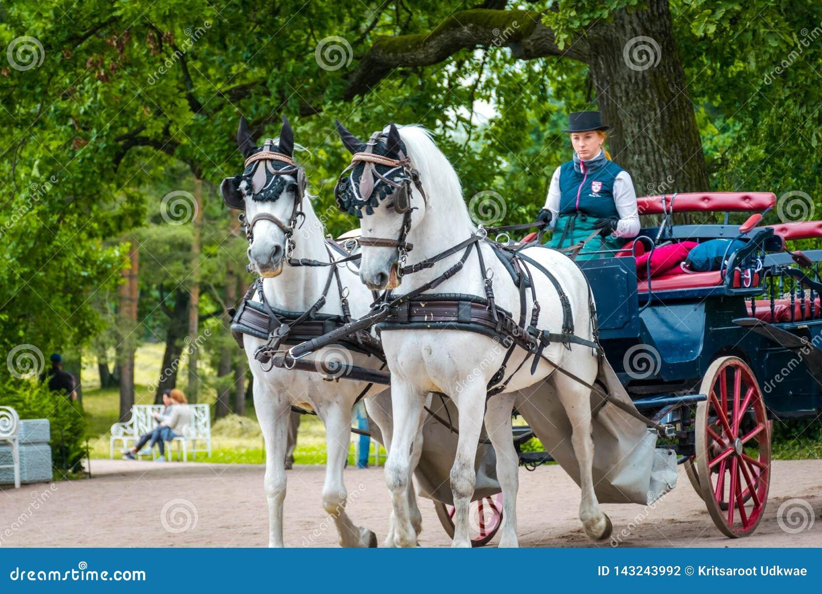 La donna guida il trasporto del cavallo a Catherine Palace in San Pietroburgo, Russia