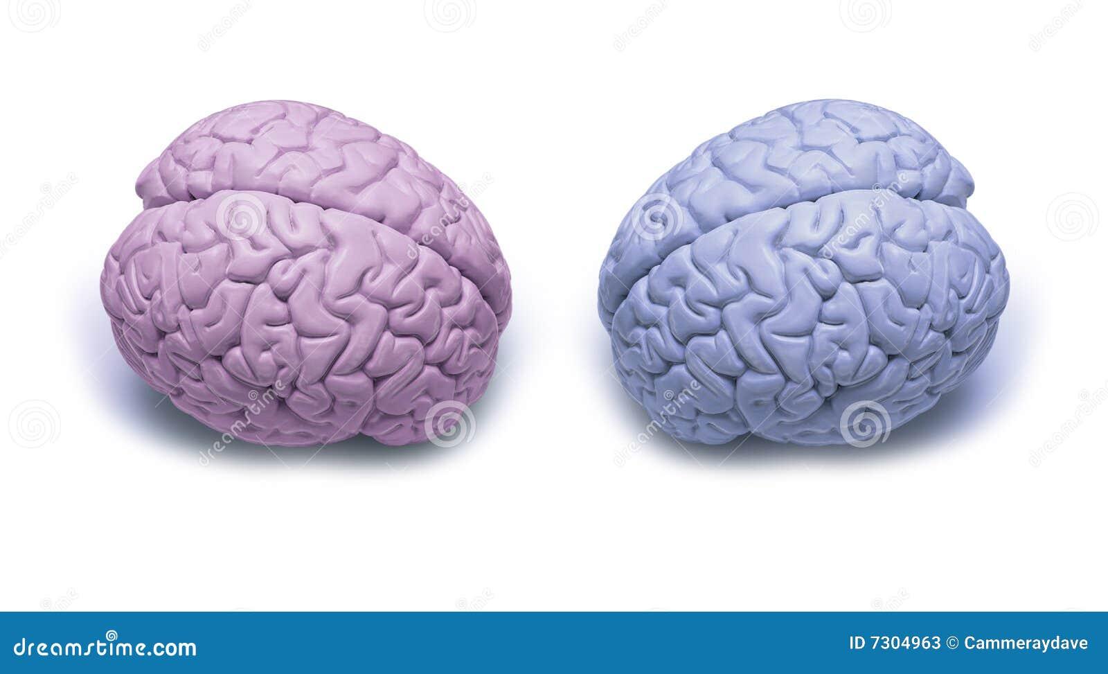 La donna mette in versi i cervelli dell uomo