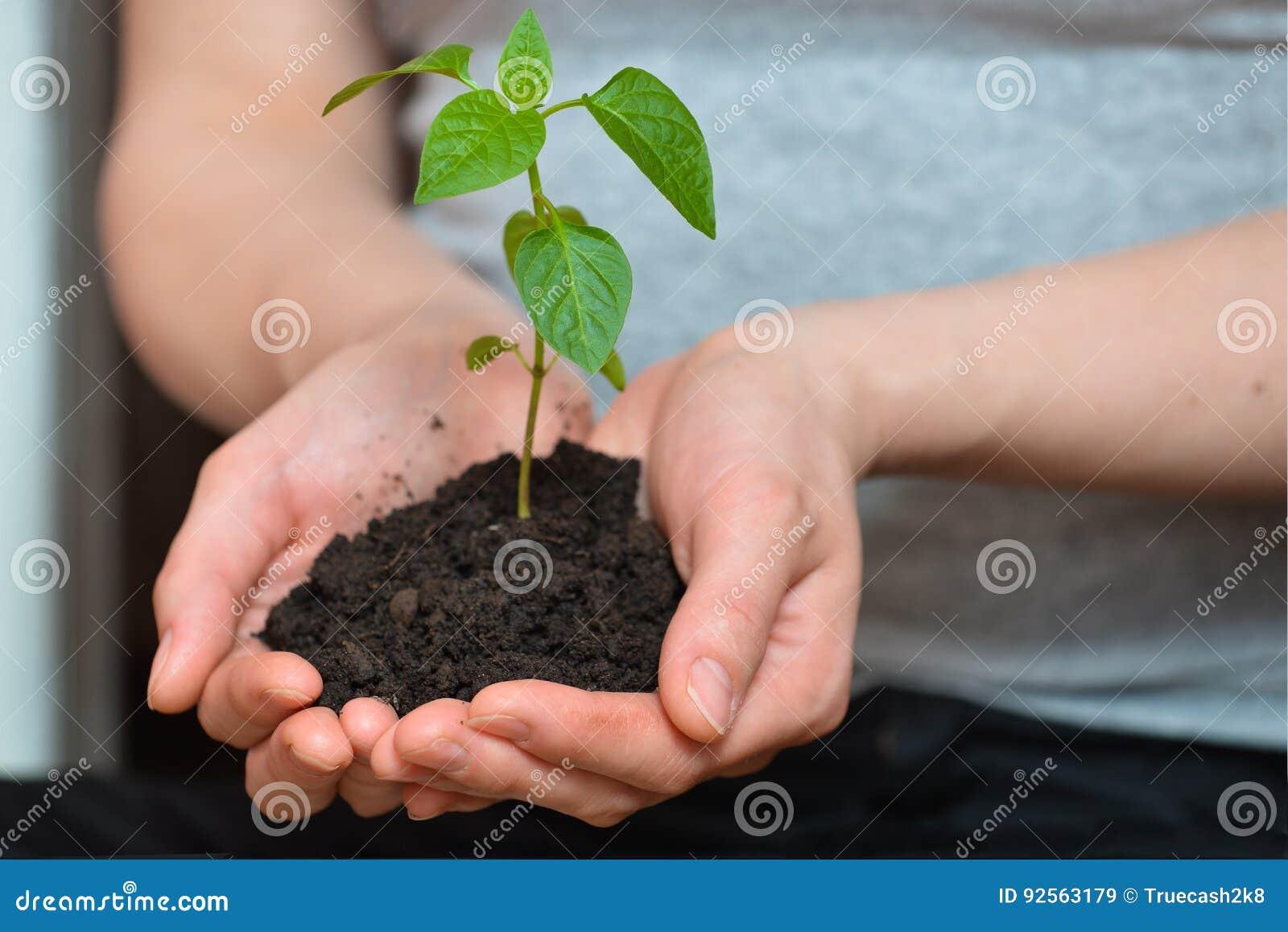 La donna passa la plantula della tenuta nel suolo del fertil Concetto di ecologia