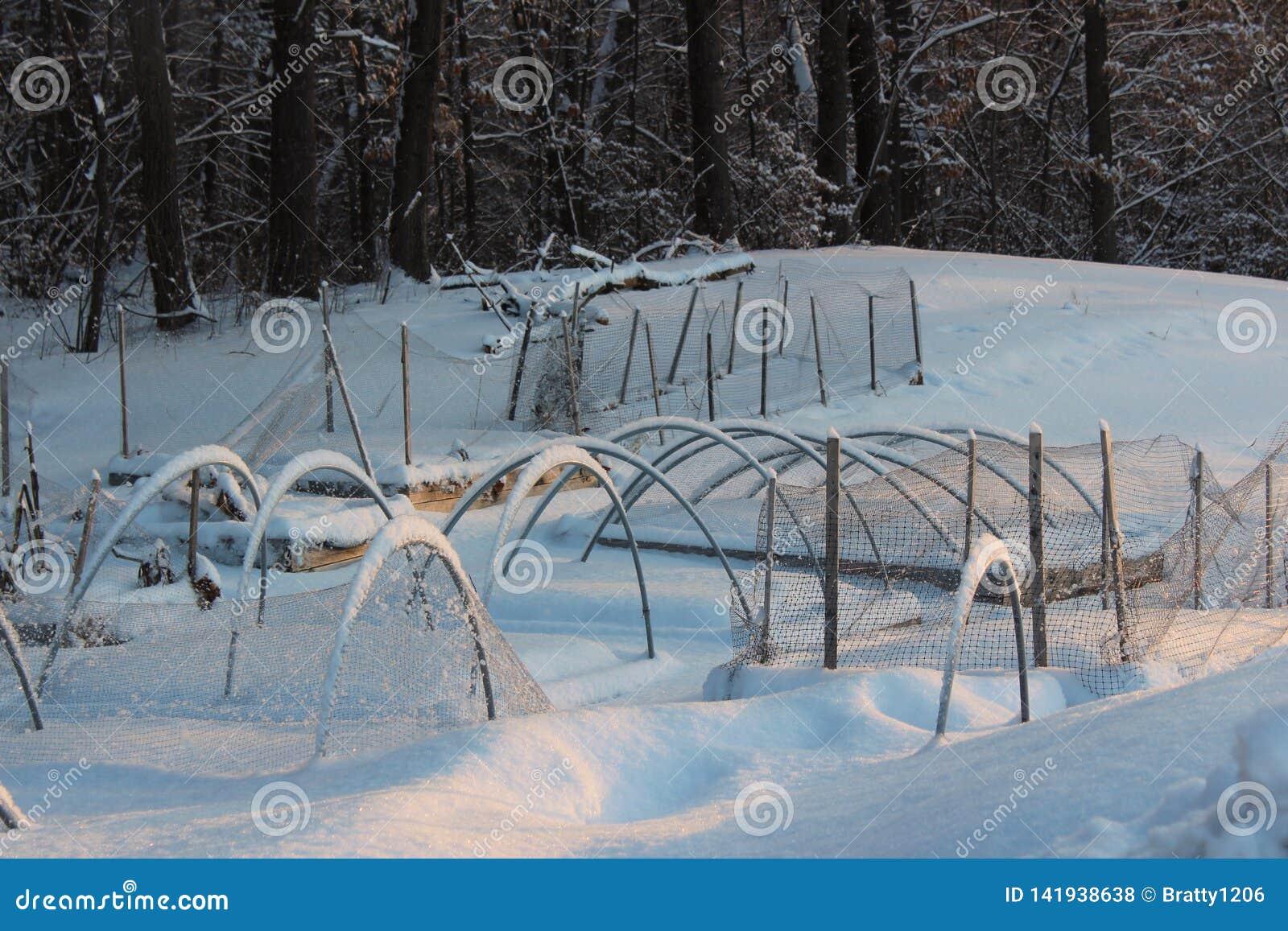 La escena Nevado con las camas del jardín cubiertas con pulgadas de nieve y de hielo profundos, firma que sigue siendo invierno