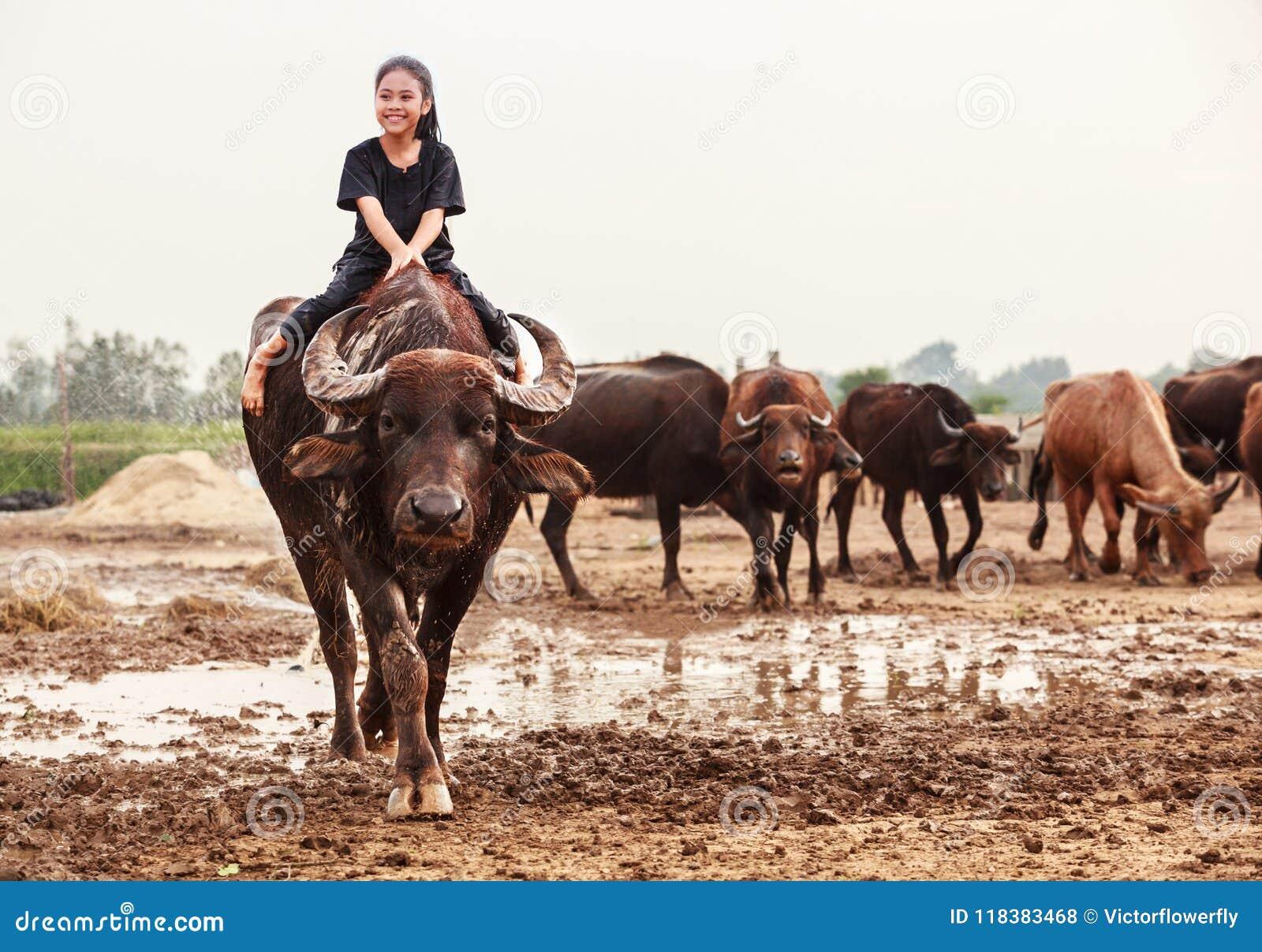 La escena tradicional rural de Tailandia, muchacha tailandesa del pastor del granjero está montando un búfalo, tendiendo búfalos