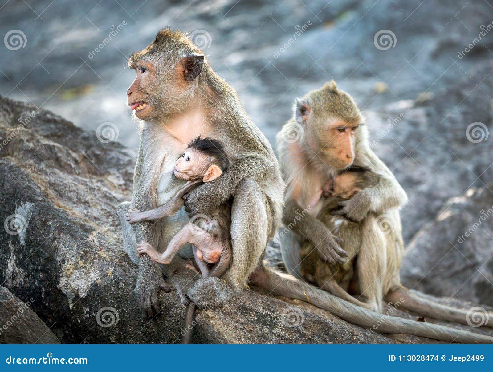 La familia de monos