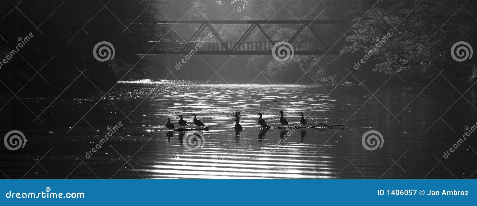 La famille des canards détendent sur l eau