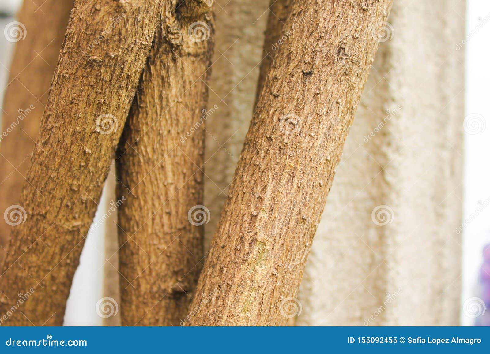 La fantasía una de la mañana de la ecología vegetal del tronco planta