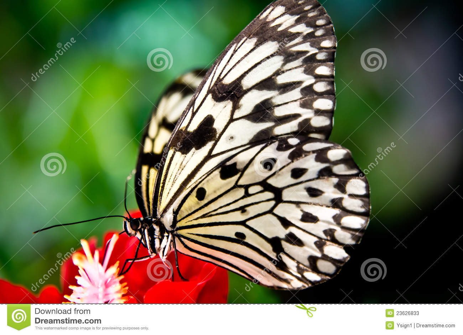 La farfalla di carta del cervo volante