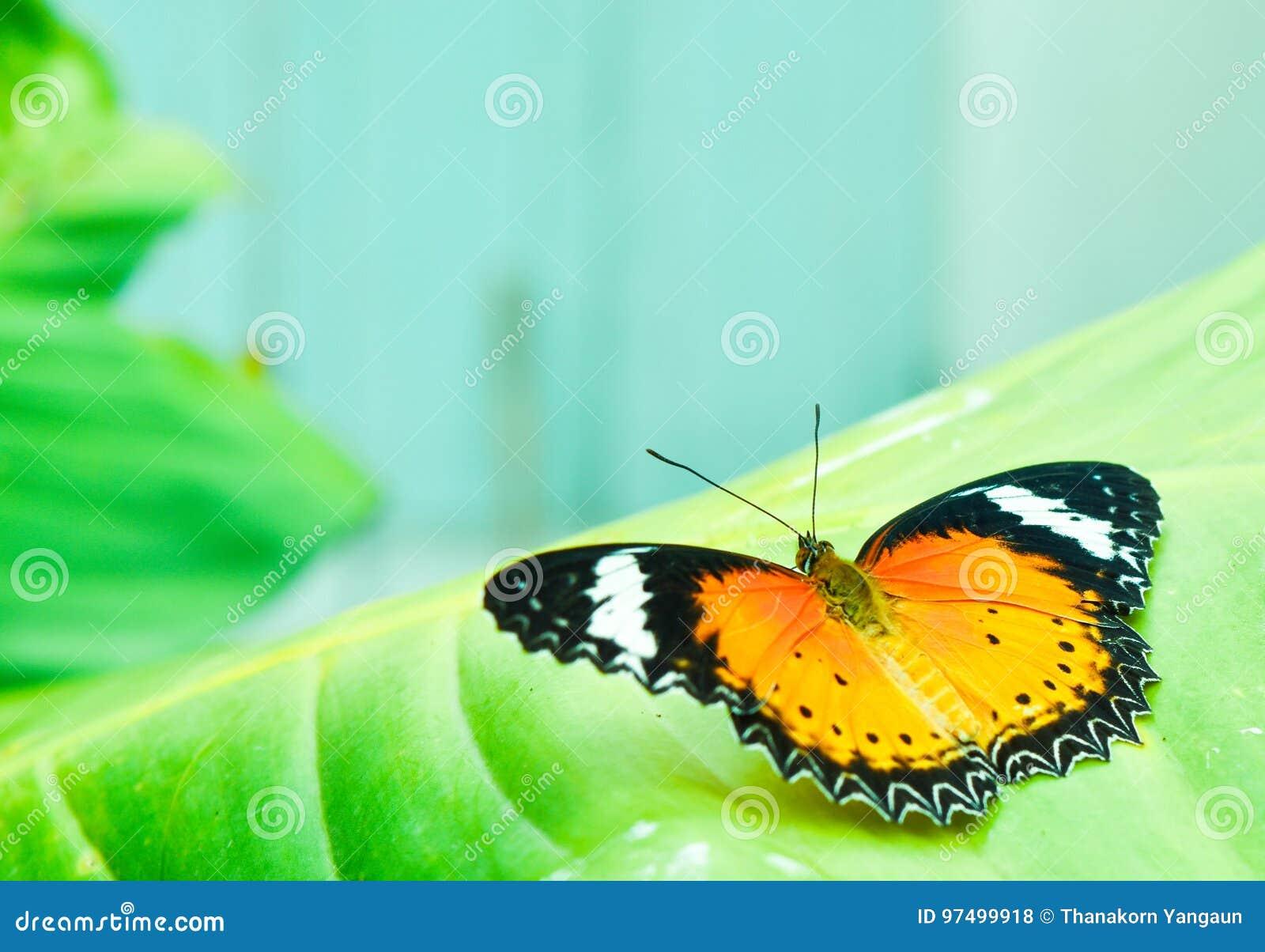 La farfalla sul foglio