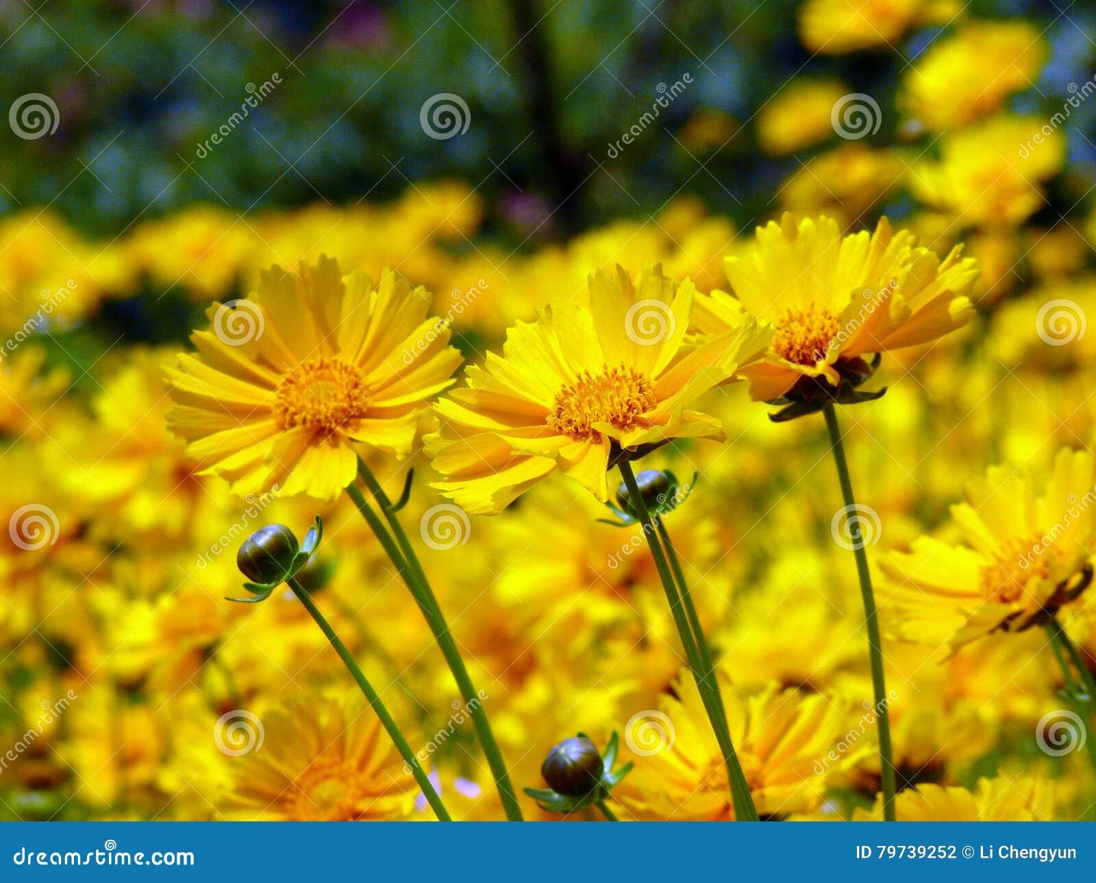 La felicidad es como las flores
